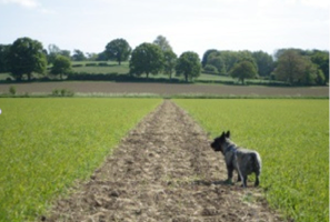 marked out path through field